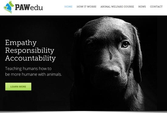 Is this Homepage SEO? Pawedu.com